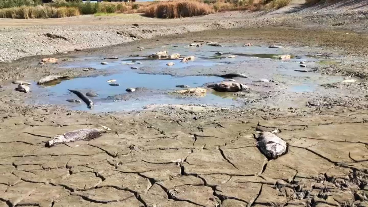 Several dead fish spotted on South Bay Pond, which is drying up - NBC Bay Area