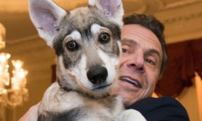 Cold hearted Cuomo digs Captain the Dog
