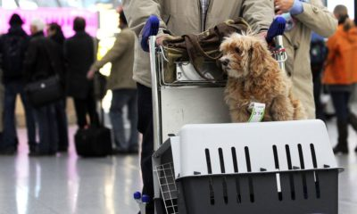 Everything you need to know to fly a dog in 2021