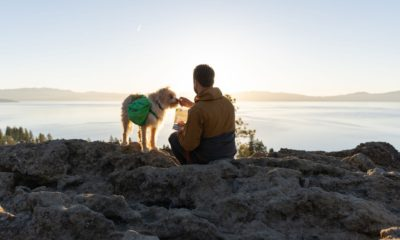 How to adopt the perfect adventure dog