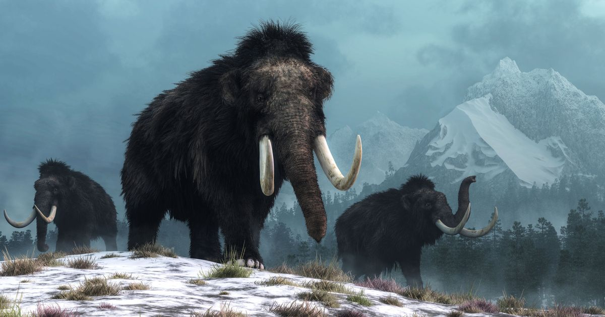 Maybe we're not trying to clone woolly mammoths now