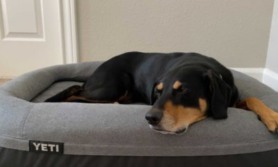 Yeti Trailhead Dog Bed Review